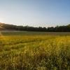 best-field-sunrise-800